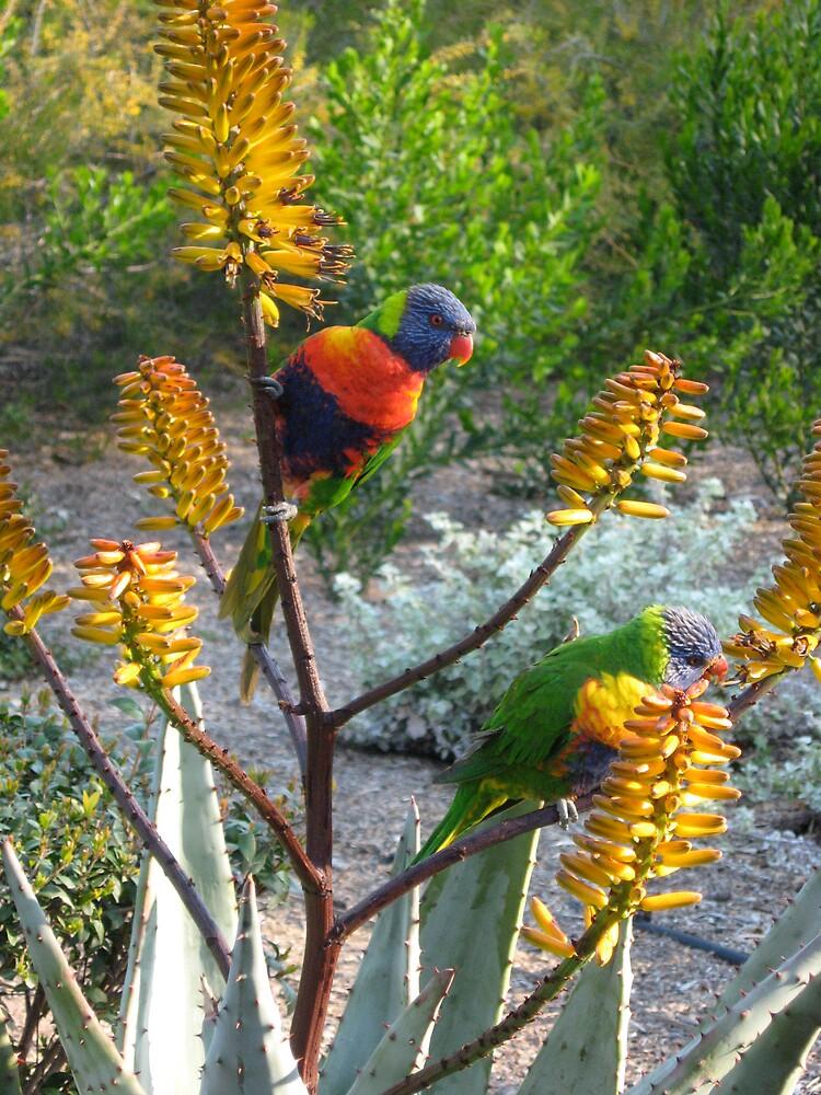 Rainbow Lorikeets by TreeFern