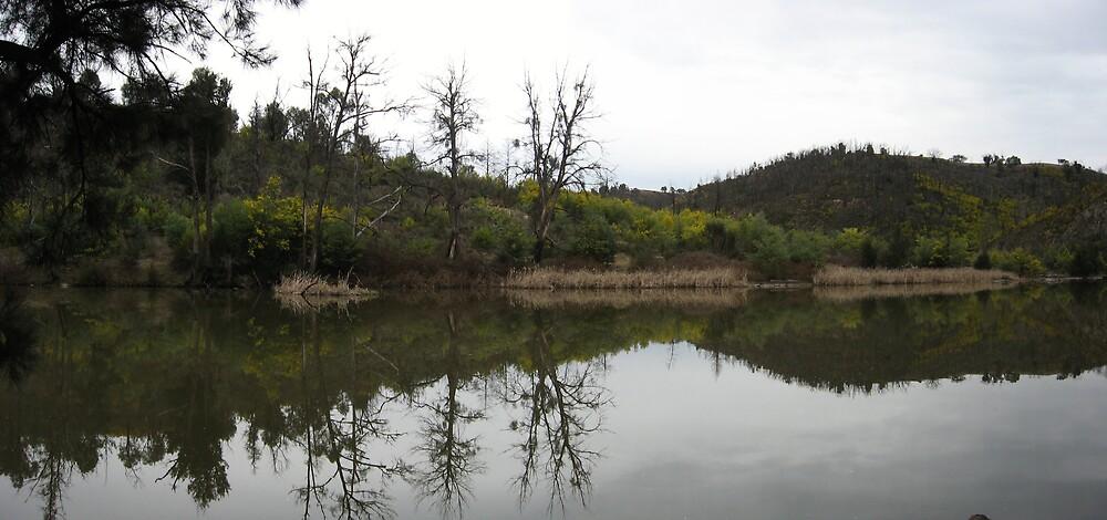 Wattle season on the river by TreeFern