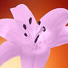 Glowing Lily Color Background by hurmerinta