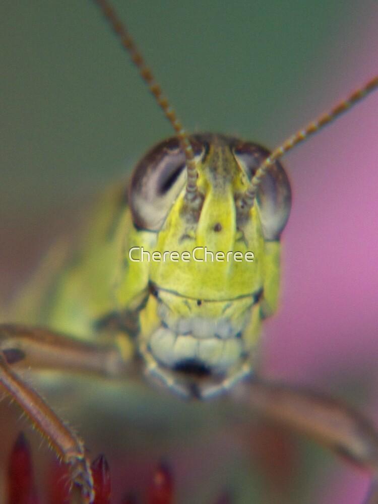 Grasshopper 2 by ChereeCheree