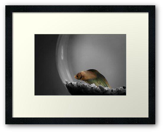 Living in a Bubble by Angela Stewart