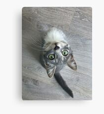 Gray kitten with green eyes  Canvas Print
