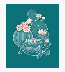 Find a tortoise  Photographic Print