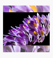 Purple orchid best love Photographic Print