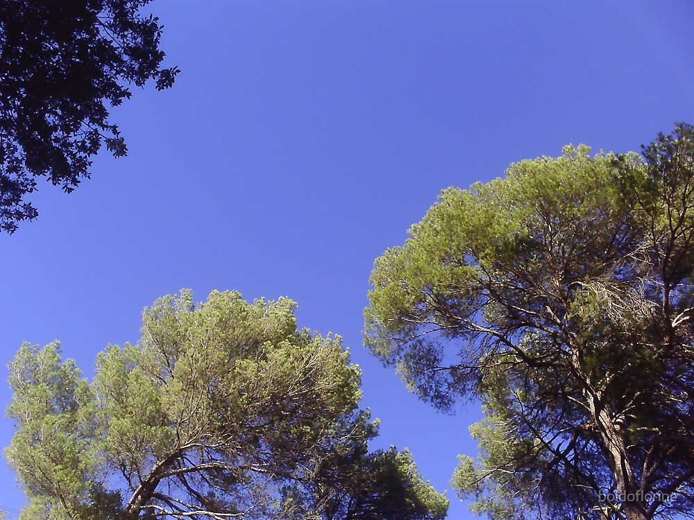 Blue Sky and Trees by boldoflorine