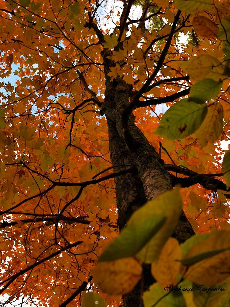 The Maple Tree by babyangel