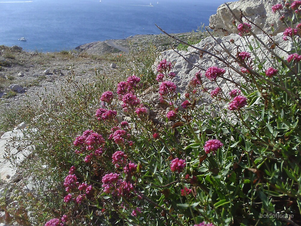 Pink flowers and sea  by boldoflorine