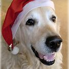 Happy Christmas Golden Retriever Dog by Nicole Zeug