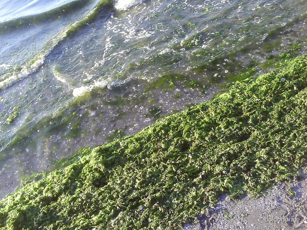 Lake Green algues by boldoflorine