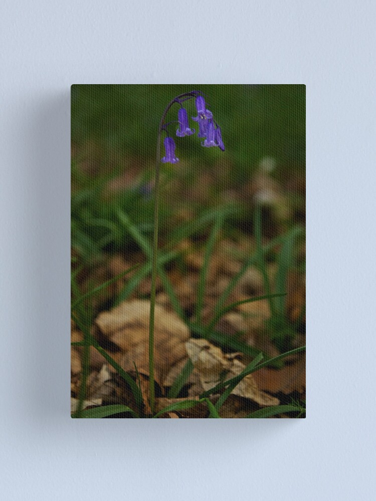 Alternate view of Single Bluebell in Prehen Woods, Derry Canvas Print