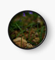 Single Bluebell in Prehen Woods, Derry Clock