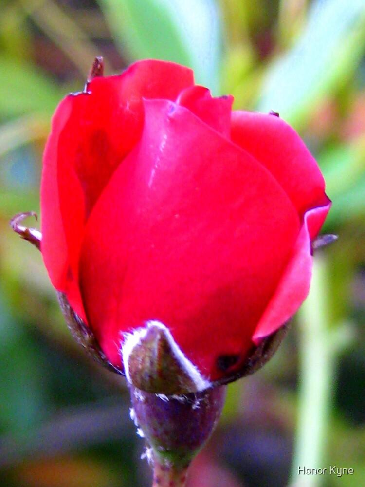 Rosebud by Honor Kyne