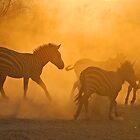 Dusky Zebras ! by Anthony Goldman
