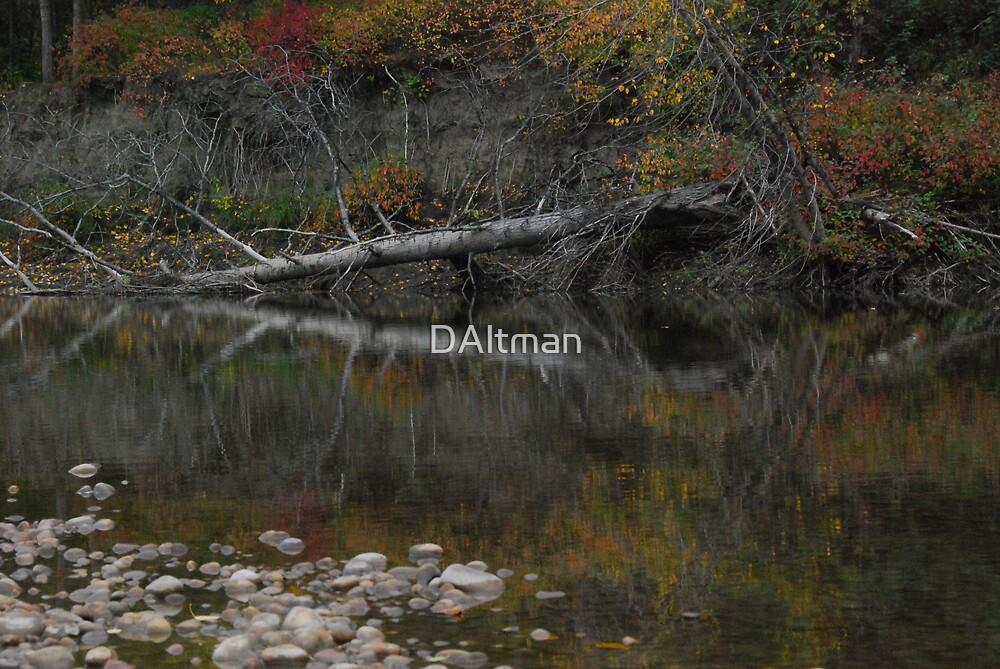 Fallen Tree by DAltman