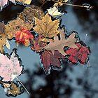 Fall-en Leaves.Canton, Ohio. by Billlee