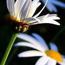 Late Afternoon Sunshine by HippyDi
