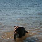 3 Nick's Rescue Dog Rosie a Kelpie-Border Collie by Cathie Brooker