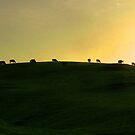 California Coast Cows at Sunset by Wayne King