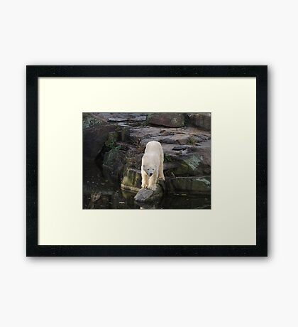 Polar Bear Rock (Berlin)  Framed Print