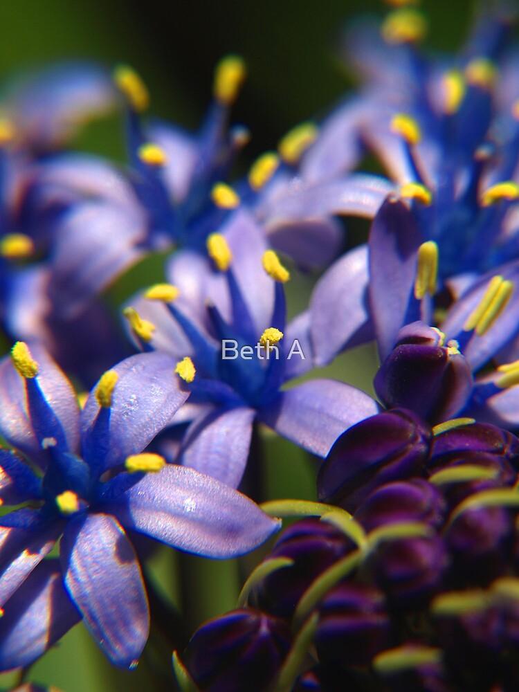 Hyacinth by Beth A