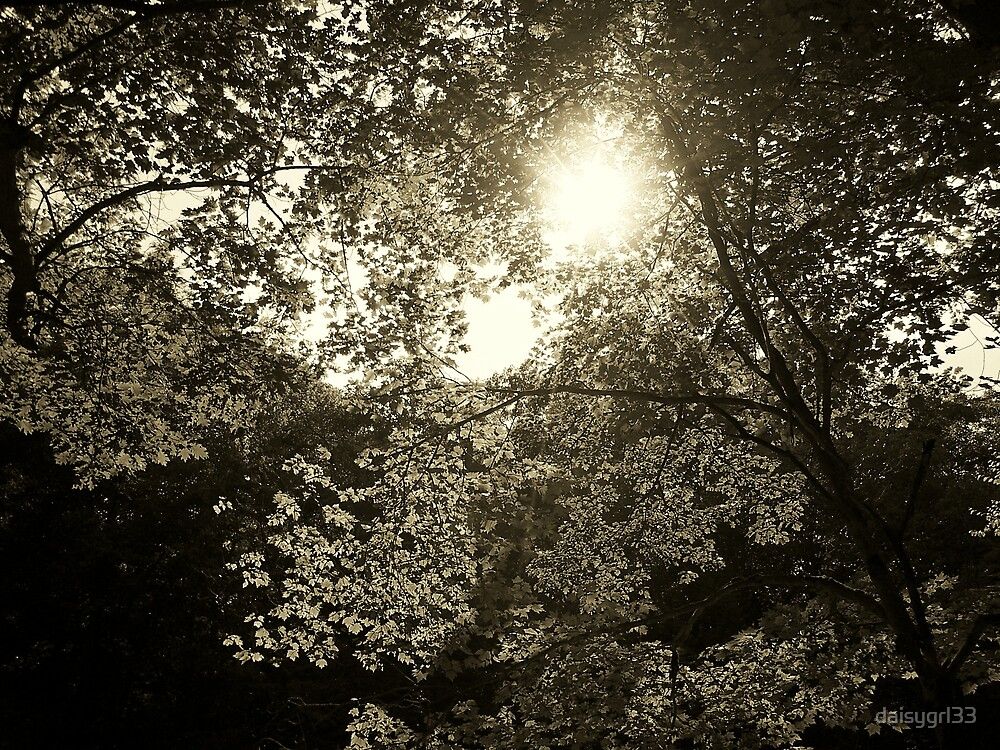 sunset thru the leaves by daisygrl33
