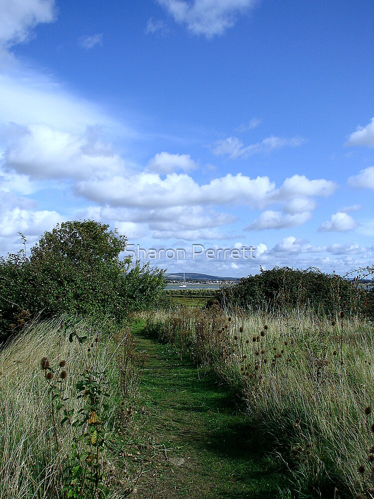 A path with a view by Sharon Perrett