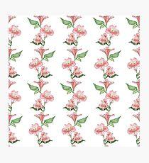 Flower, pattern, Alstroemeria Photographic Print