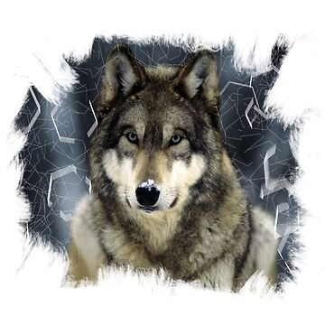 Wolf  by silverscreen