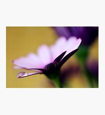 Colour Of Life XXXVI Photographic Print