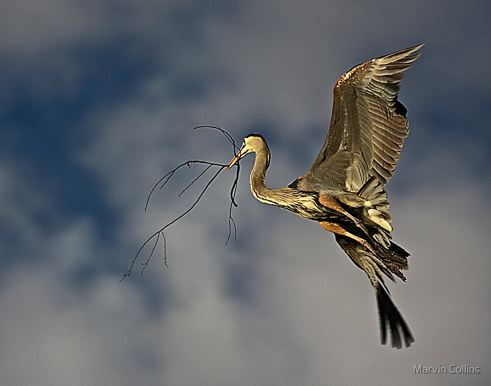 Blue Heron by Marvin Collins