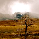 Peek-a-boo The Rockies by Pamela Hubbard