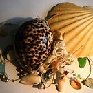 Strings and Shells by debidabble