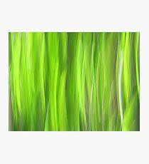Grass - Light Photographic Print