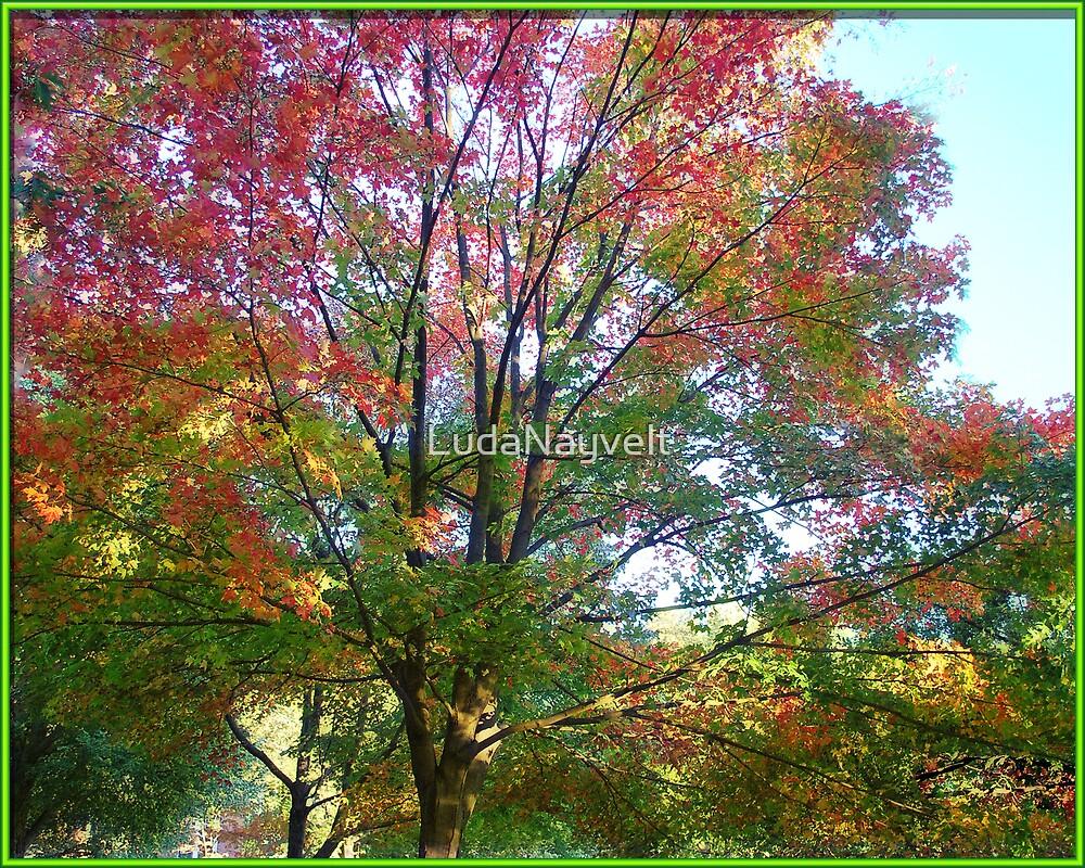 Fall Colors by LudaNayvelt