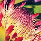 Protea by Catherine Radley (Liversidge)