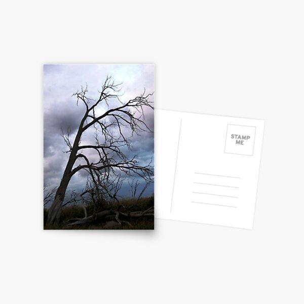 Desolation Postcard