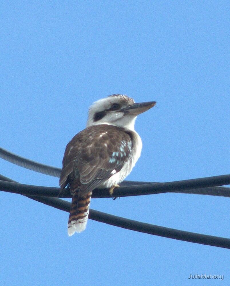Kookaburra sits on the electric wire.... by JulieMahony
