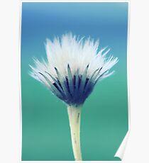 natural brush Poster