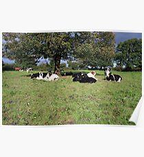County Clare farm scene 4 Poster