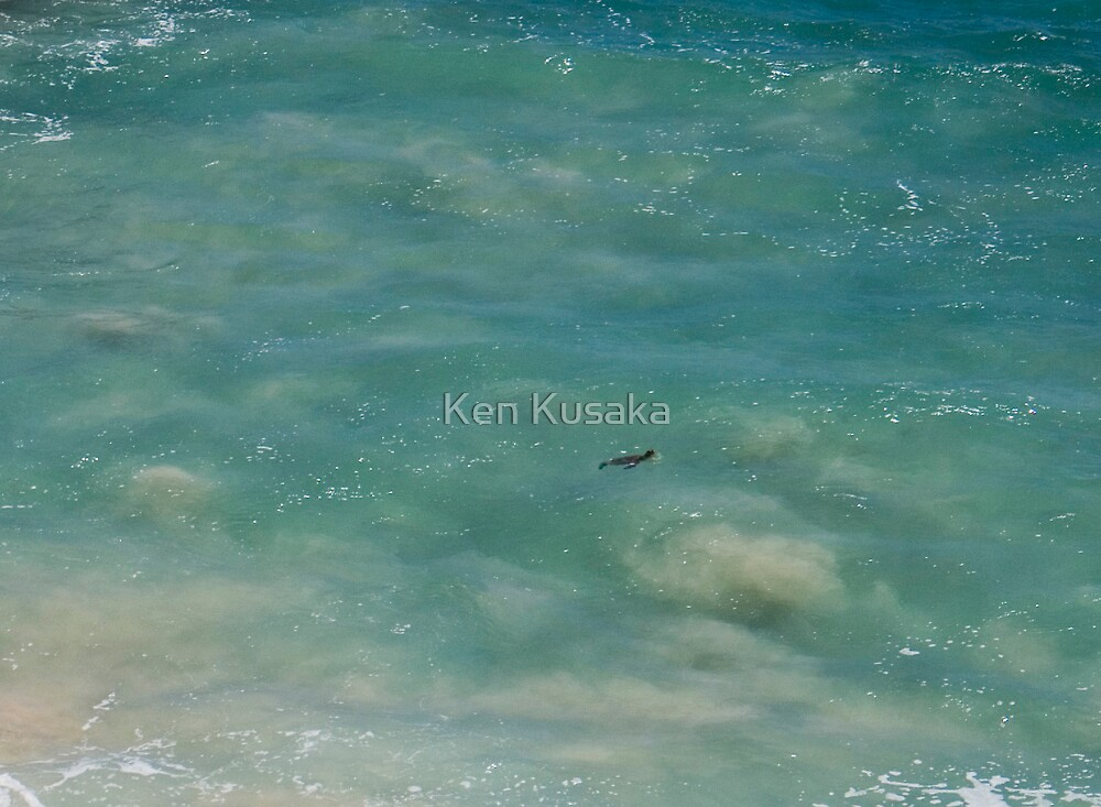 Lil Turtle by Ken Kusaka
