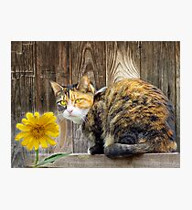 Pretty Tortie Photographic Print