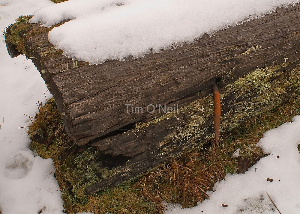 Nailed in the Snow by Tim O'Neil
