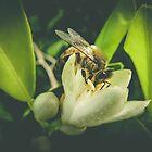 Honey & Lemon by Catherine Radley (Liversidge)