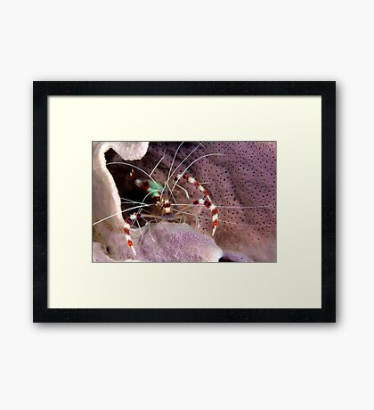 Banded Cleaners Framed Print