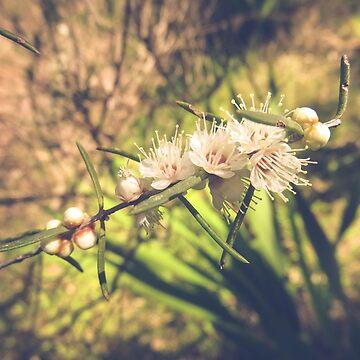Blossoms by CelestaDarkide