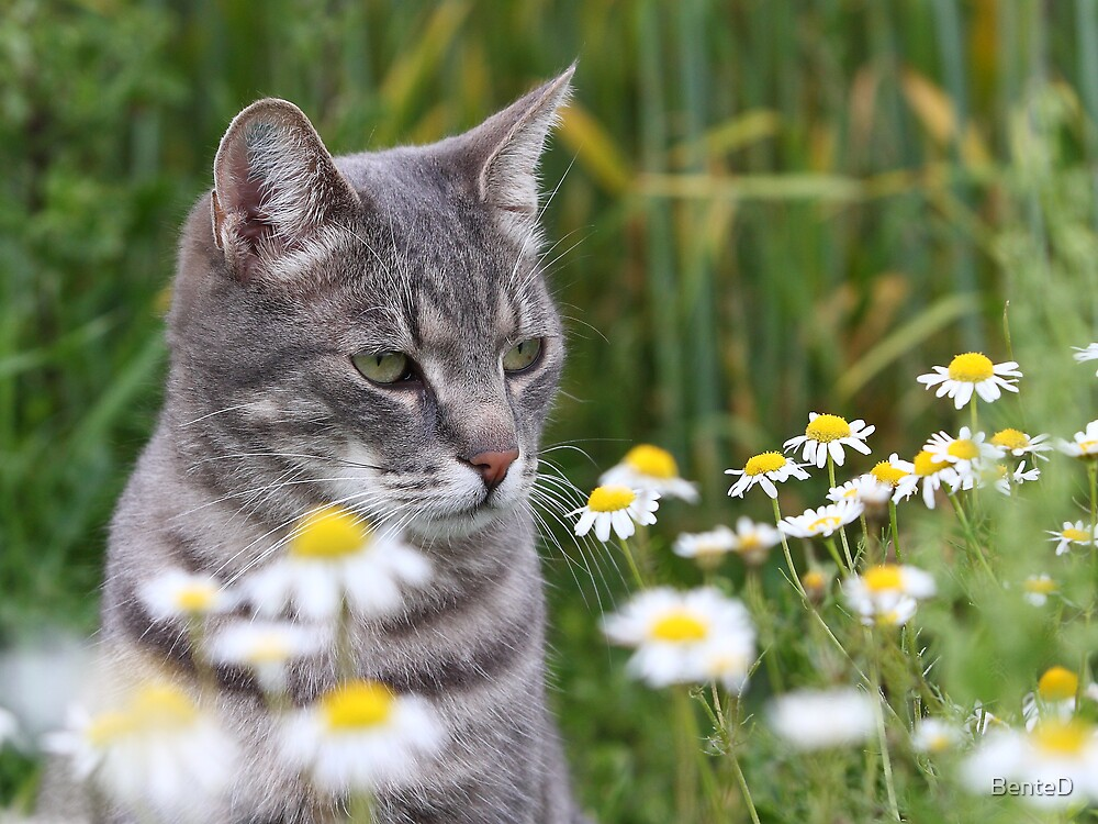 Cat between flowers by BenteD