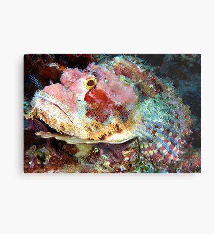 Smallscale Scorpionfish Metal Print