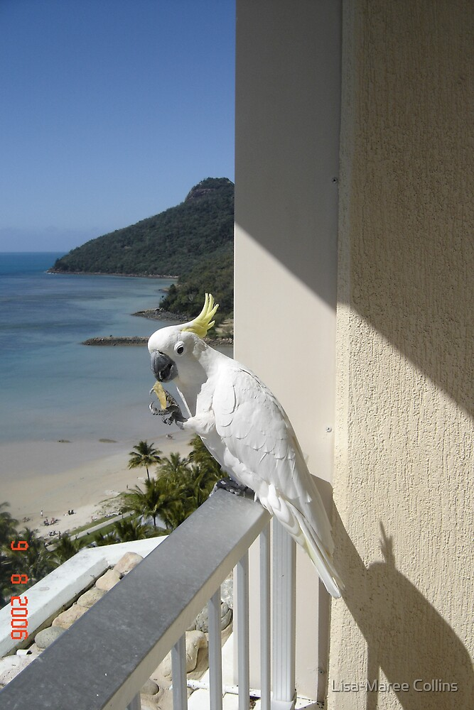 Cockatoo eating a chip by Lisa-Maree Collins