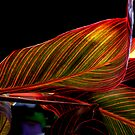 Canvas Leaf II by Tom Newman