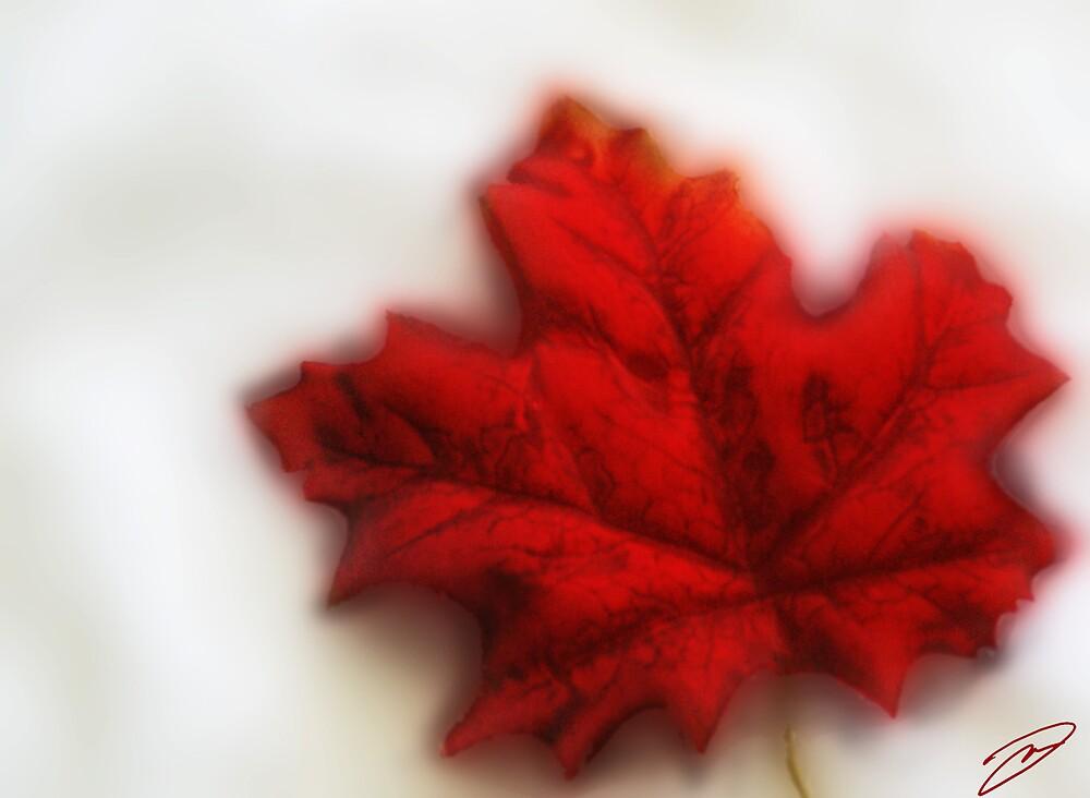 Maple Leaf by David W Kirk